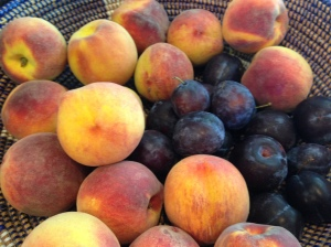 Late summer fruit- Italian Plums and peaches